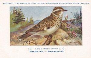 Woodlark Lullula Arborea WW2 Bird Rare Postcard