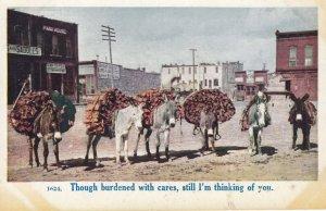 Loaded Donkey Pack Team , 00-10s