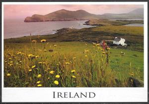 Ireland, wild flowers, sea coast, unused