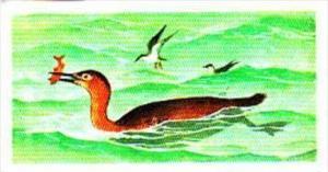 Brooke Bond Tea Trade Card Prehistoric Animals No 30 Ichthyornis &  Hesper...