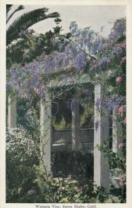 Wistaria Vine , SIERRA MADRE , California , 00-10s