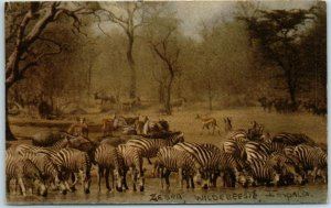 Vintage South Africa Postcard KRUGER NATIONAL PARK Zebra Wildebeast Impala