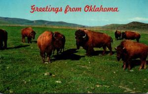 Oklahoma Greetings With Buffalo