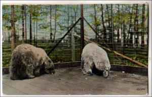 Polar Bears, Walbridge Park, Toledo OH