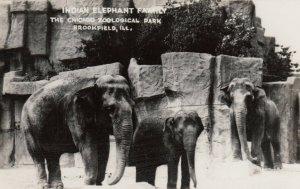 RP: CHICAGO , Illinois , 1930s ; Indian Elephant Family
