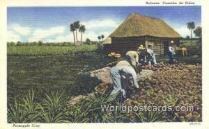 Cuba, Republica de Cuba Habana Cosecha de Pinas, Pineapple Crop