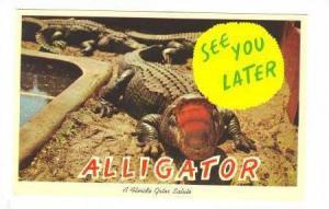 A Florida gator salute,Florida, 40-60s