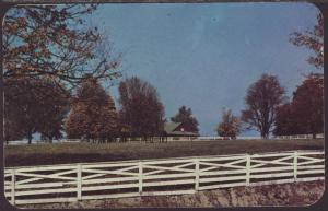 Thoroughbred Horses Postcard BIN