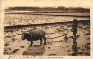 CPA Vietnam Indochine TONKIN - Le Labourage des Rizières (61548)
