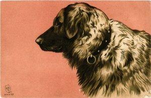 PC CPA DOGS, BIG WHITE & GREY DOG, VINTAGE EMBOSSED POSTCARD (b3551)