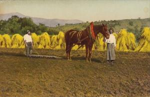 European Farmers In Hay Field With Horse and Plow