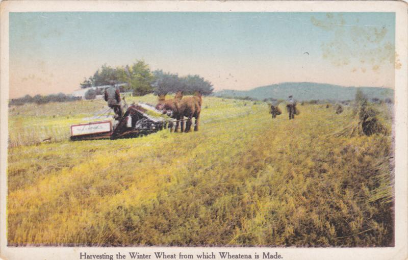 Farmers Harvesting Winter Wheat w/ Horse Drawn Tractor, 1900-10s