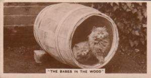 Cat Cats In Beer Barrell Cylinder German Real Photo Cigarette Card
