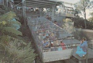 Railway , Australia , 1960-80s ; Blue Mountains