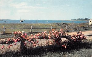 Roses on Rail Fence Chatham, Massachusetts Postcard