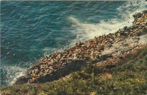 Vintage Postcard Oregon Coast - Sea Lions - Animals - H. A. Williams