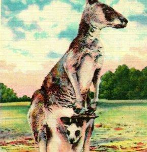 Vtg Linen Postcard Kangaroo and Young Unposted UNP