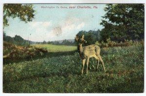 Washington Co. Game, near Charlotte, Me.