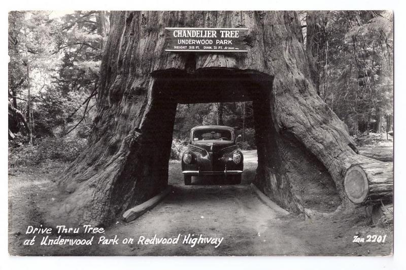 Chandelier Drive Thru Redwood Tree Underwood Park RPPC / HipPostcard