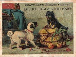 1880's Lovely Read's Sore Throat & Catarrh Powder Quack Dogs Trade Card &W