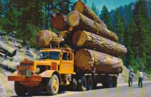 Logging Truck Large Diesel Truck Hauling Large Logs On Mountain Roads In The ...