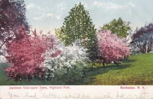 Japanese Crab Apple Trees in Highland Park Rochester NY New York - pm 1906 - UDB