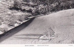 C R Childs Company Duneland Study Sand Grass Real Photo