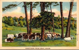Maine Greetings From Gray 1941 Curteich
