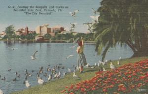 Feeding Gulls and Ducks - Eola Park - Orlando FL, Florida - Linen