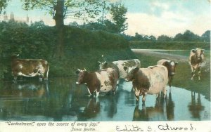Cows at Water, Tucks 1907 Postcard, Contentment Poem by Beattie