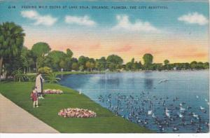 Florida Orlando Feeding Wild Ducks At Lake Eola