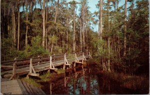Postcard GA Georgia Waycross Okefenokee Swamp Park Walking Bridge Unposted