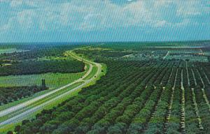 Orange Groves From Florida Citrus Tower Clermont Florida