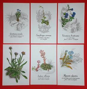 1980's Postcard Set of 6 Scotland's Rare Wild Flowers on Ben Lawers in Envelope