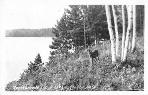 Mio Michigan Northwoods Deer Fawn Real Photo Antique Postcard K28860