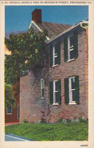 Unusual House & Tree On Braddock Street Winchester Virginia