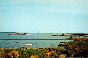 Maryland Smith Island Greetings Looking North Near Harbor At Ewell