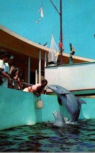 Florida Miami Seaquarium Playful Porpoises