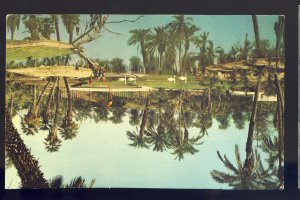 Los Angeles, California/CA Postcard, Palm Island, Busch Gardens