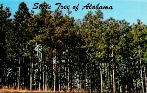 Alabama Official State Tree The Southern Pine