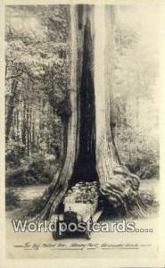 British Columbia, Canada Big Hollow Tree, Stanley Park Vancouver  Big Hollow ...