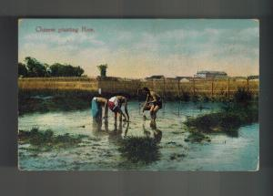 Mint  China picture color  Postcard Farmers Peasants Planting Rice
