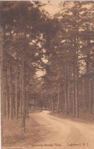 New Jersey Lakewood Driveway Through Pines Albertype