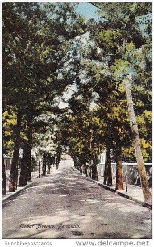 Bermuda Cedar Avenue