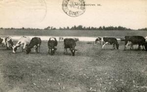DE - Georgetown. Cow Pasture