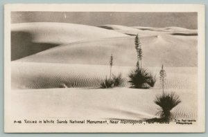 Alamagordo New Mexico~Yucca Plants in Bloom~White Sands Nat'l Monument~1940 RPPC