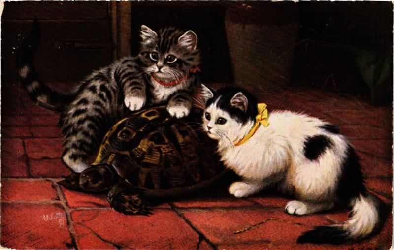 CATS PC Cats and a turtle (a2059)
