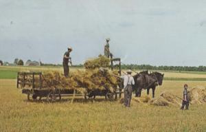 Mennonite Canadian Farming Area Elmira Kitchener Ontario Farm Postcard