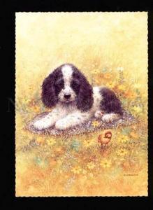 047542 Charming PUPPY Fluffy SPANIEL by GIORDANO old PC