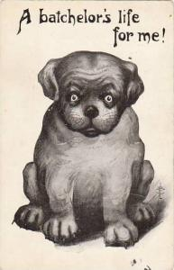 Fred Cavally Dog Series A batchelor's life for me 1910